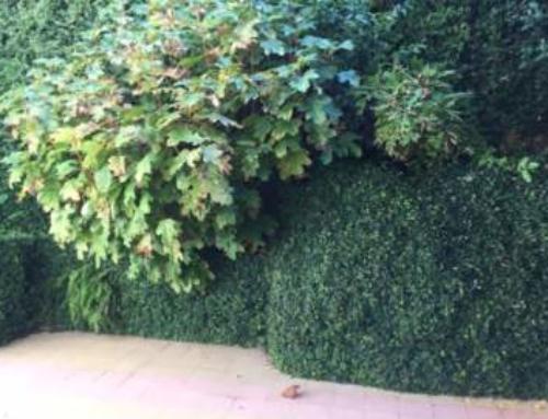 Giardino Terrazza Roma